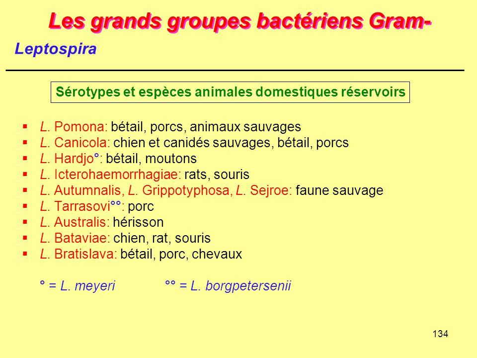 134 Les grands groupes bactériens Gram-  L. Pomona: bétail, porcs, animaux sauvages  L. Canicola: chien et canidés sauvages, bétail, porcs  L. Hard