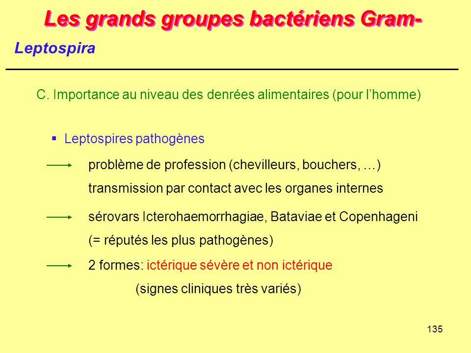 135 Les grands groupes bactériens Gram- C. Importance au niveau des denrées alimentaires (pour l'homme) Leptospira  Leptospires pathogènes sérovars I