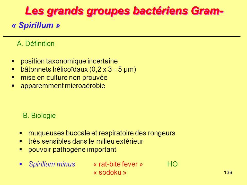 136 Les grands groupes bactériens Gram-  position taxonomique incertaine  bâtonnets hélicoïdaux (0,2 x 3 - 5 µm)  mise en culture non prouvée  app
