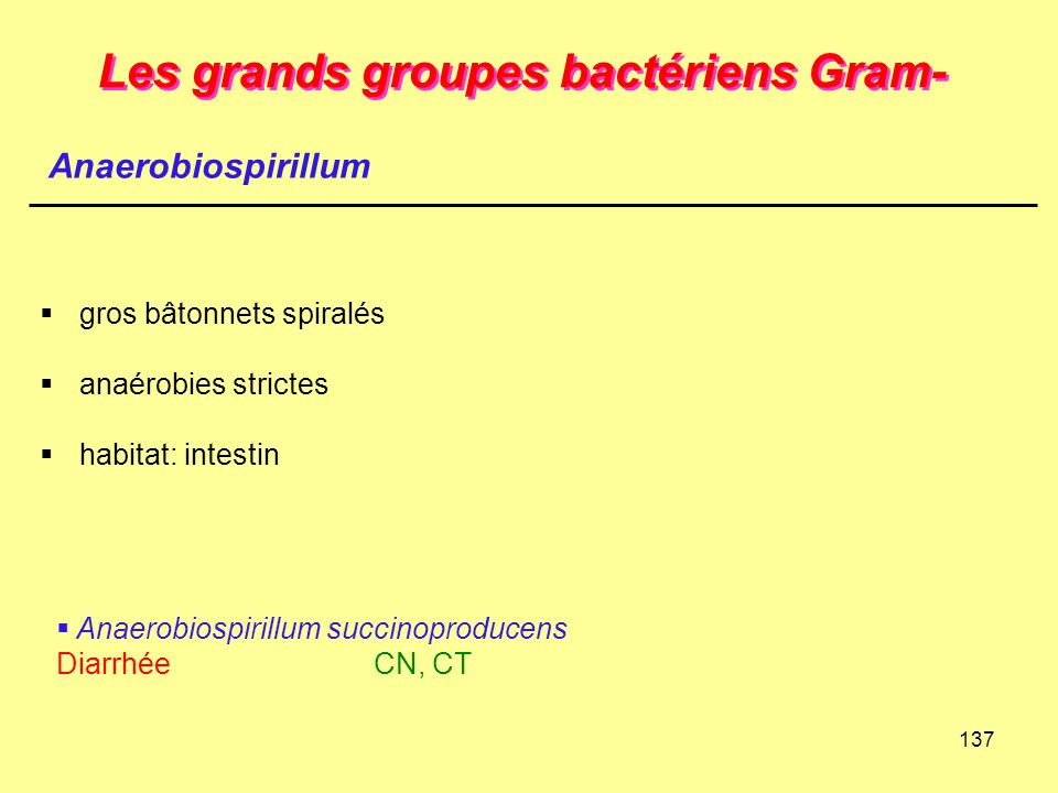 137 Les grands groupes bactériens Gram-  gros bâtonnets spiralés  anaérobies strictes  habitat: intestin  Anaerobiospirillum succinoproducens Diar