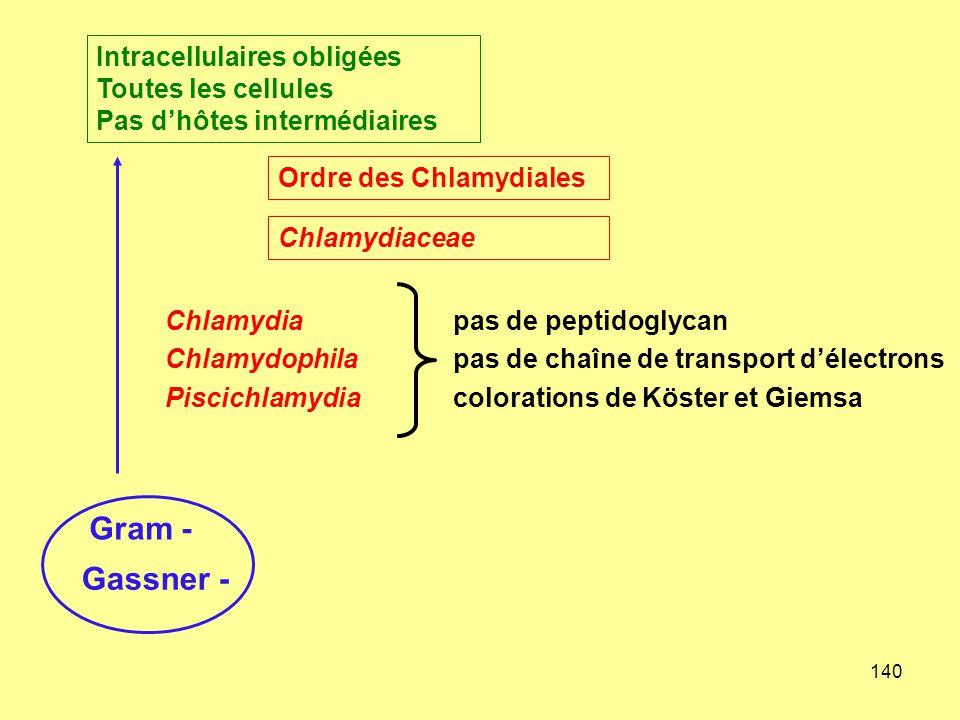140 Gram - Gassner - Intracellulaires obligées Toutes les cellules Pas d'hôtes intermédiaires Chlamydiapas de peptidoglycan Chlamydophilapas de chaîne