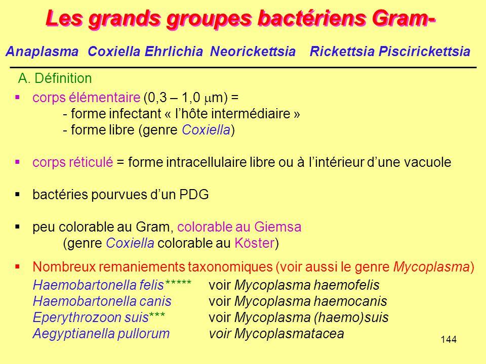 144 Les grands groupes bactériens Gram- A. Définition  corps élémentaire (0,3 – 1,0  m) = - forme infectant « l'hôte intermédiaire » - forme libre (