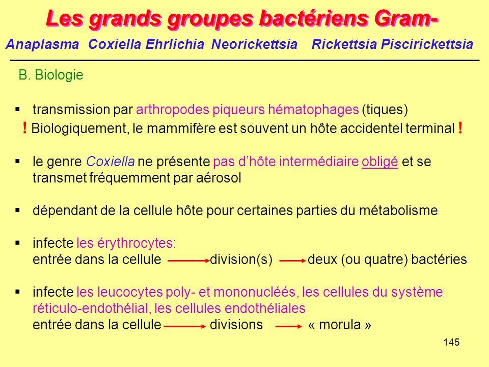 145 Les grands groupes bactériens Gram- B. Biologie  transmission par arthropodes piqueurs hématophages (tiques) ! Biologiquement, le mammifère est s