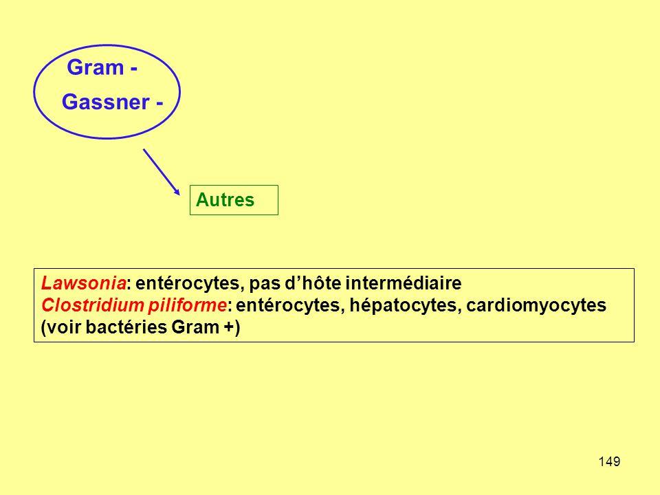 149 Gram - Gassner - Autres Lawsonia: entérocytes, pas d'hôte intermédiaire Clostridium piliforme: entérocytes, hépatocytes, cardiomyocytes (voir bact