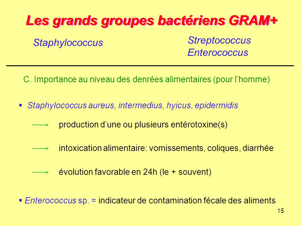 15 Les grands groupes bactériens GRAM+ Staphylococcus Streptococcus Enterococcus C. Importance au niveau des denrées alimentaires (pour l'homme)  Sta