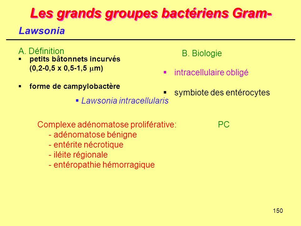 150 Les grands groupes bactériens Gram-  petits bâtonnets incurvés (0,2-0,5 x 0,5-1,5  m)  forme de campylobactère A. Définition Lawsonia Complexe