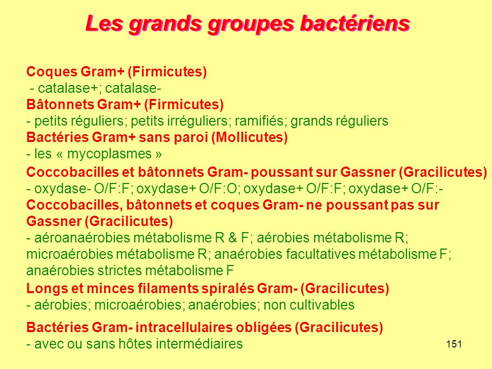 151 Les grands groupes bactériens Longs et minces filaments spiralés Gram- (Gracilicutes) - aérobies; microaérobies; anaérobies; non cultivables Coque