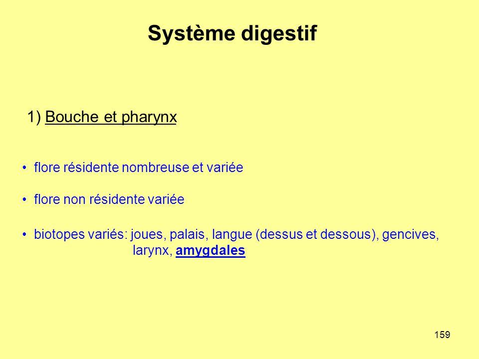 159 1) Bouche et pharynx Système digestif flore résidente nombreuse et variée flore non résidente variée biotopes variés: joues, palais, langue (dessu
