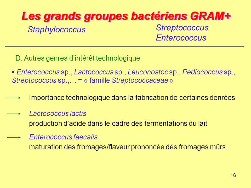 16 Les grands groupes bactériens GRAM+ Staphylococcus Streptococcus Enterococcus Importance technologique dans la fabrication de certaines denrées Ent
