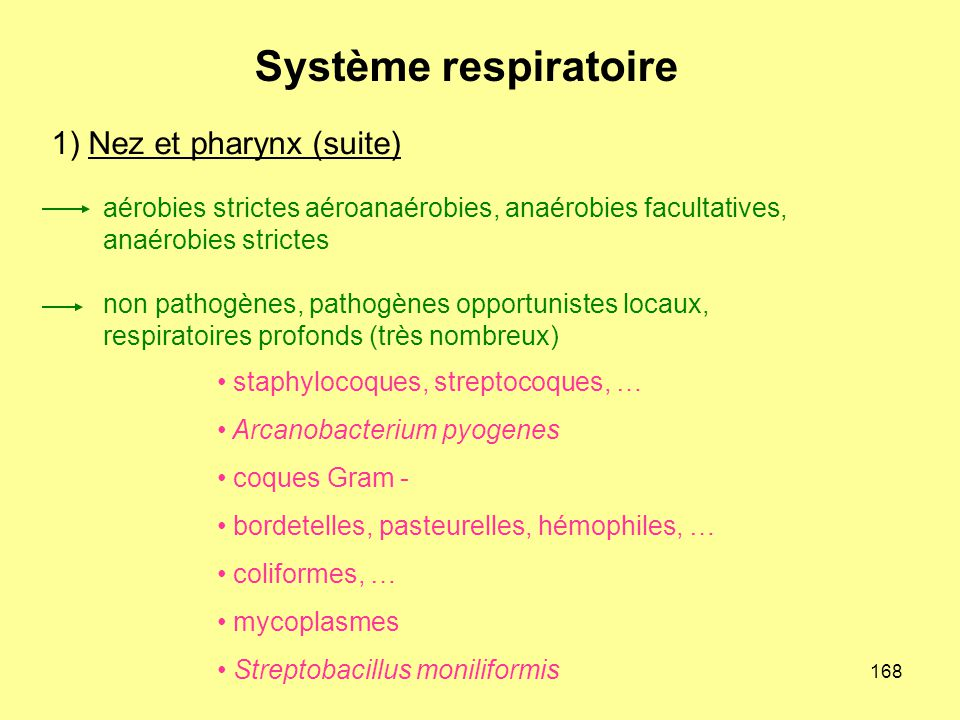 168 1) Nez et pharynx (suite) aérobies strictes aéroanaérobies, anaérobies facultatives, anaérobies strictes non pathogènes, pathogènes opportunistes