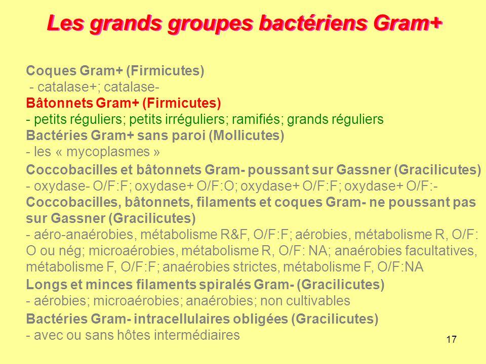 17 Les grands groupes bactériens Gram+ Longs et minces filaments spiralés Gram- (Gracilicutes) - aérobies; microaérobies; anaérobies; non cultivables