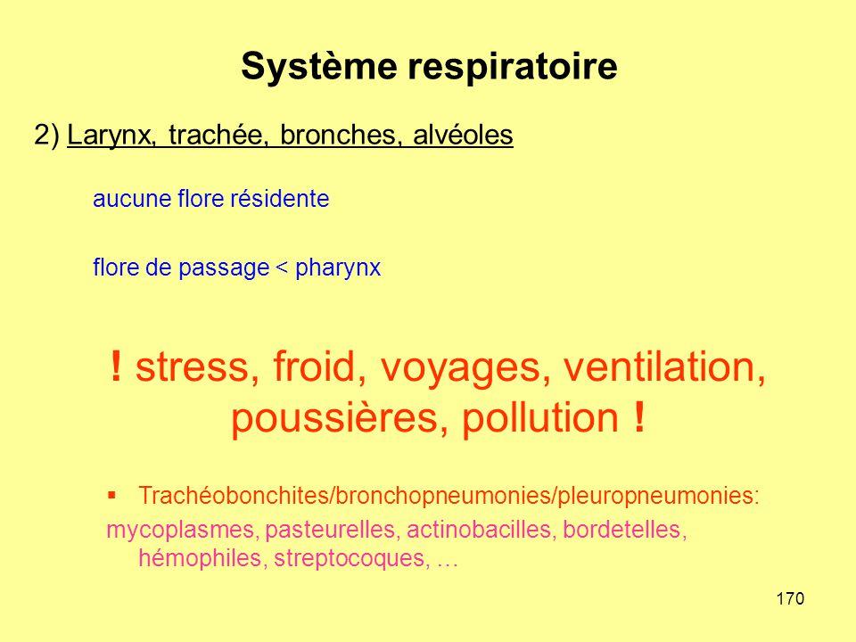 170 aucune flore résidente flore de passage < pharynx 2) Larynx, trachée, bronches, alvéoles Système respiratoire  Trachéobonchites/bronchopneumonies