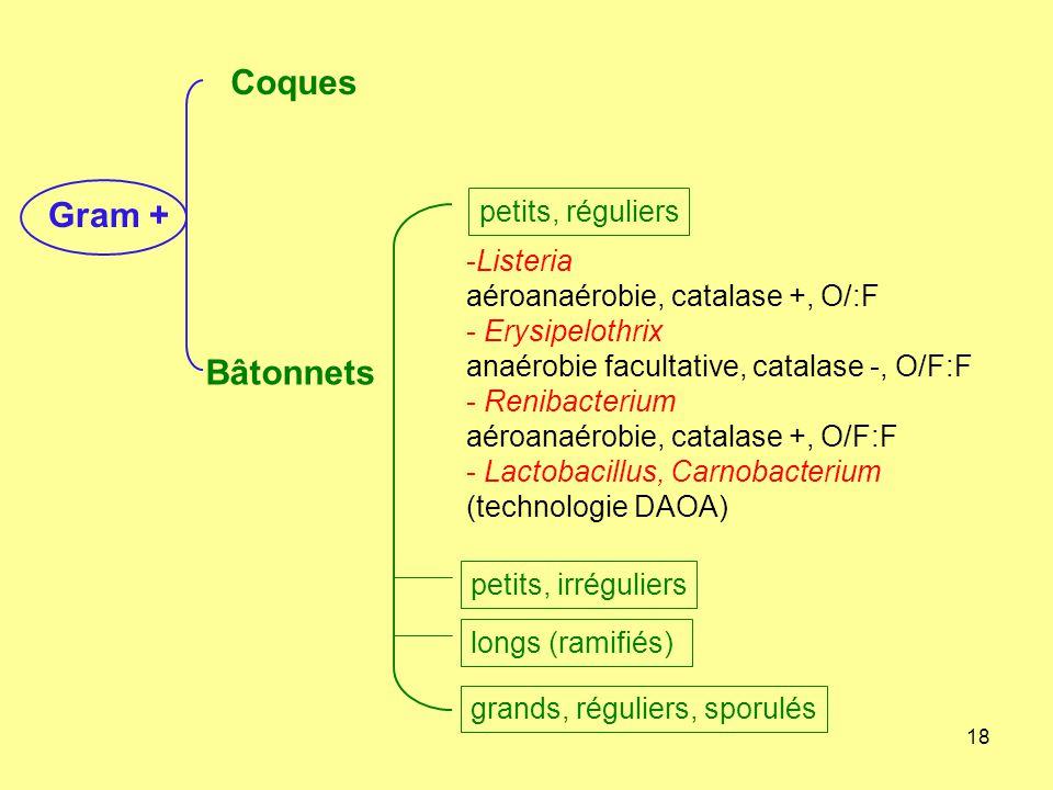 18 -Listeria aéroanaérobie, catalase +, O/:F - Erysipelothrix anaérobie facultative, catalase -, O/F:F - Renibacterium aéroanaérobie, catalase +, O/F: