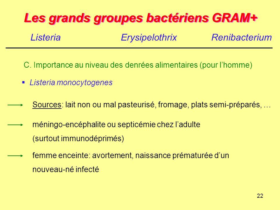 22 Les grands groupes bactériens GRAM+ ListeriaErysipelothrix C. Importance au niveau des denrées alimentaires (pour l'homme)  Listeria monocytogenes
