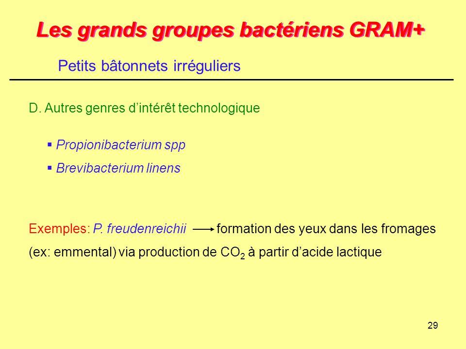 29 Les grands groupes bactériens GRAM+ D. Autres genres d'intérêt technologique Petits bâtonnets irréguliers  Propionibacterium spp  Brevibacterium
