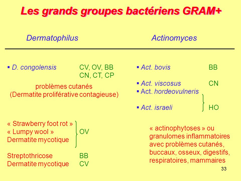 33 Les grands groupes bactériens GRAM+ DermatophilusActinomyces  D. congolensisCV, OV, BB CN, CT, CP « Strawberry foot rot » « Lumpy wool »OV Dermati