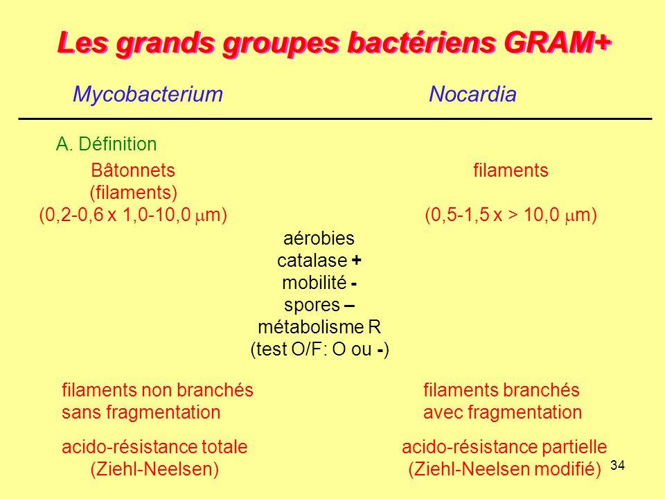 34 Les grands groupes bactériens GRAM+ MycobacteriumNocardia A. Définition aérobies catalase + mobilité - spores – métabolisme R (test O/F: O ou -) Bâ