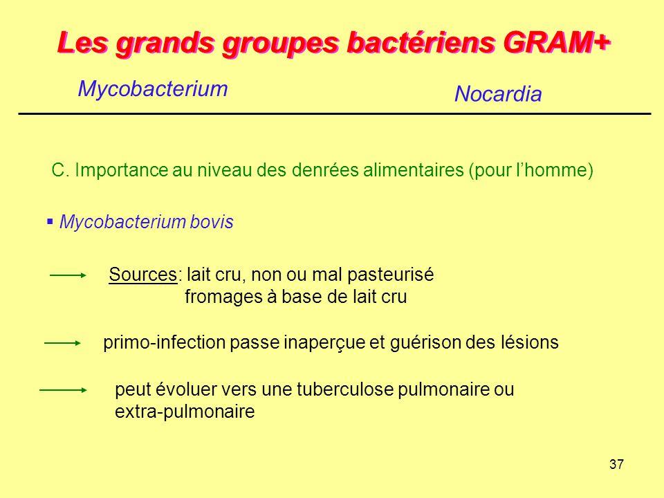 37 Les grands groupes bactériens GRAM+ Mycobacterium Nocardia C. Importance au niveau des denrées alimentaires (pour l'homme)  Mycobacterium bovis So