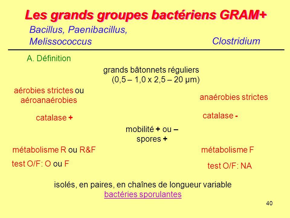 40 Les grands groupes bactériens GRAM+ isolés, en paires, en chaînes de longueur variable bactéries sporulantes Bacillus, Paenibacillus, Melissococcus