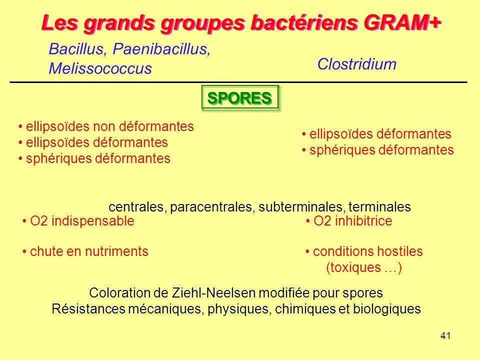41 Les grands groupes bactériens GRAM+ Clostridium SPORES centrales, paracentrales, subterminales, terminales ellipsoïdes non déformantes ellipsoïdes