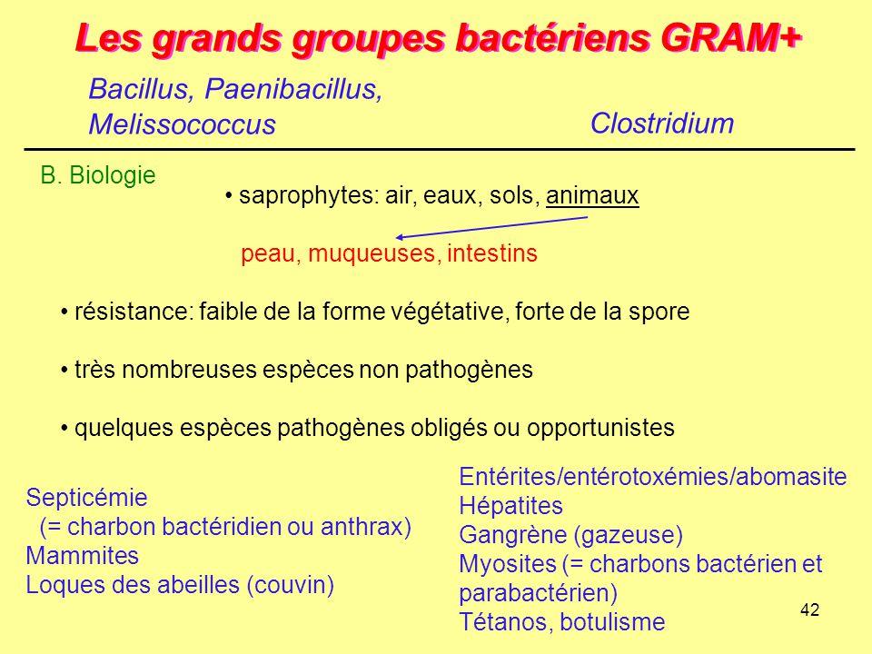 42 Les grands groupes bactériens GRAM+ Clostridium B. Biologie saprophytes: air, eaux, sols, animaux peau, muqueuses, intestins résistance: faible de