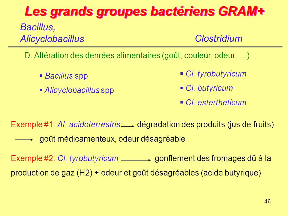 46 Les grands groupes bactériens GRAM+ Clostridium D. Altération des denrées alimentaires (goût, couleur, odeur, …) Exemple #2: Cl. tyrobutyricumgonfl