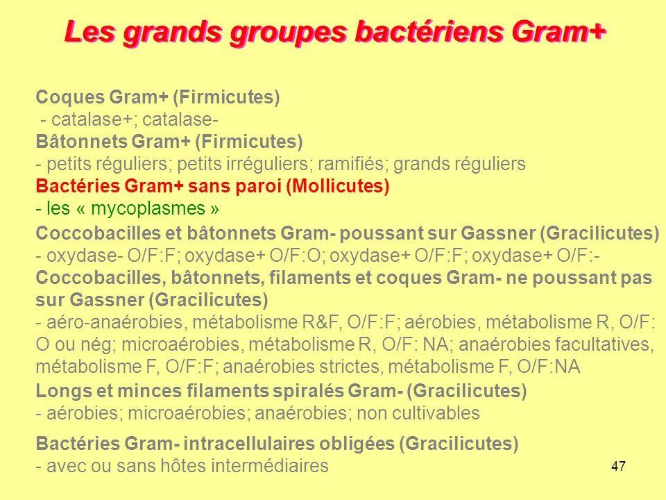 47 Les grands groupes bactériens Gram+ Longs et minces filaments spiralés Gram- (Gracilicutes) - aérobies; microaérobies; anaérobies; non cultivables