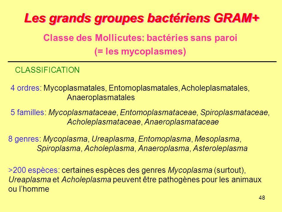 48 Les grands groupes bactériens GRAM+ Classe des Mollicutes: bactéries sans paroi (= les mycoplasmes) CLASSIFICATION 4 ordres: Mycoplasmatales, Entom