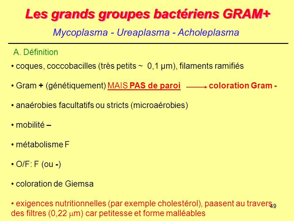 49 Les grands groupes bactériens GRAM+ Mycoplasma - Ureaplasma - Acholeplasma A. Définition coques, coccobacilles (très petits ~ 0,1 µm), filaments ra