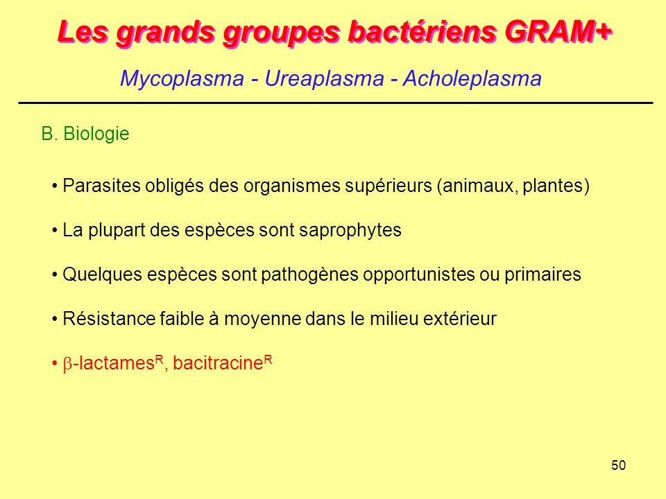 50 Les grands groupes bactériens GRAM+ Mycoplasma - Ureaplasma - Acholeplasma B. Biologie Parasites obligés des organismes supérieurs (animaux, plante