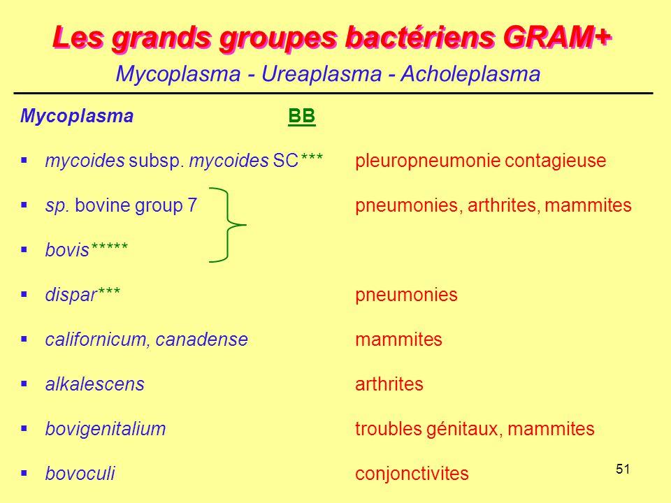 51 Les grands groupes bactériens GRAM+ MycoplasmaBB  mycoides subsp. mycoides SC***pleuropneumonie contagieuse  sp. bovine group 7pneumonies, arthri
