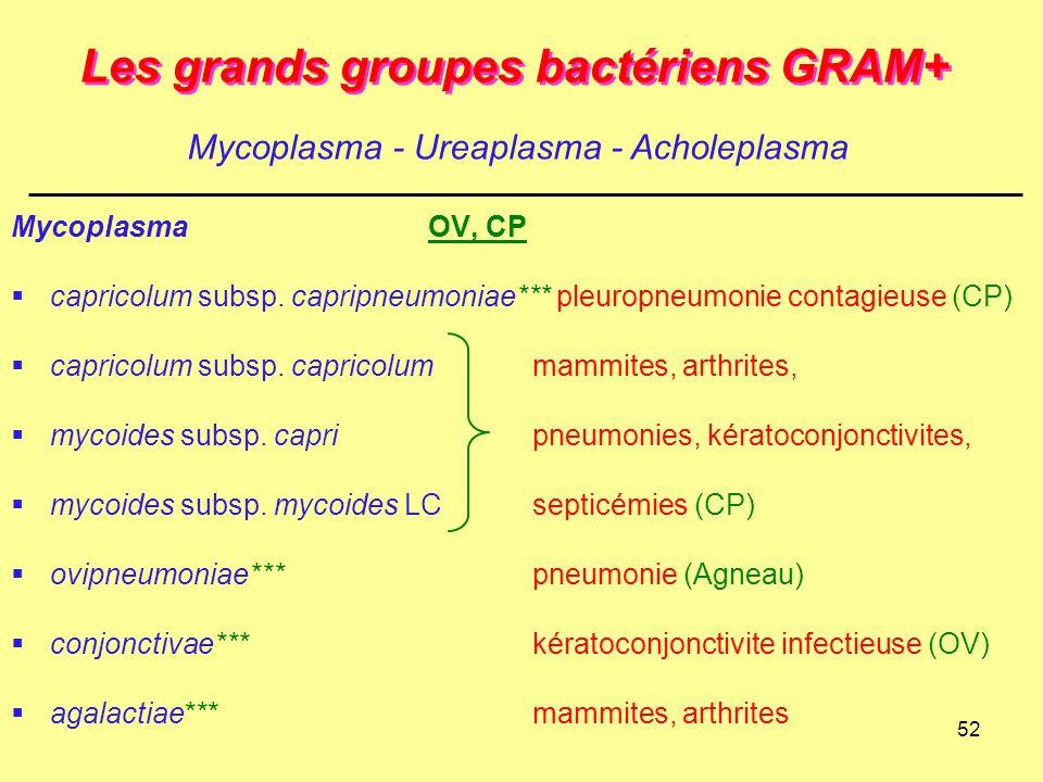 52 Les grands groupes bactériens GRAM+ MycoplasmaOV, CP  capricolum subsp. capripneumoniae*** pleuropneumonie contagieuse (CP)  capricolum subsp. ca
