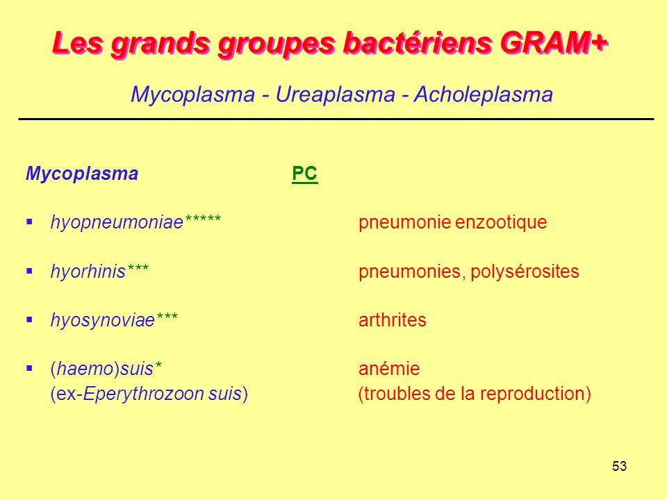 53 Les grands groupes bactériens GRAM+ MycoplasmaPC  hyopneumoniae*****pneumonie enzootique  hyorhinis***pneumonies, polysérosites  hyosynoviae***a
