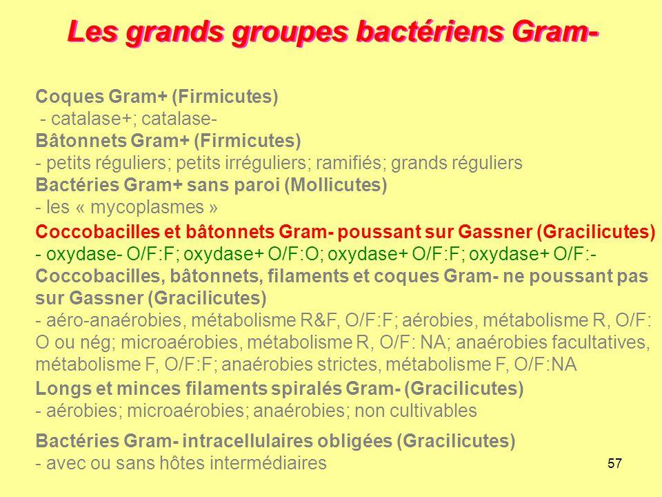 57 Les grands groupes bactériens Gram- Longs et minces filaments spiralés Gram- (Gracilicutes) - aérobies; microaérobies; anaérobies; non cultivables
