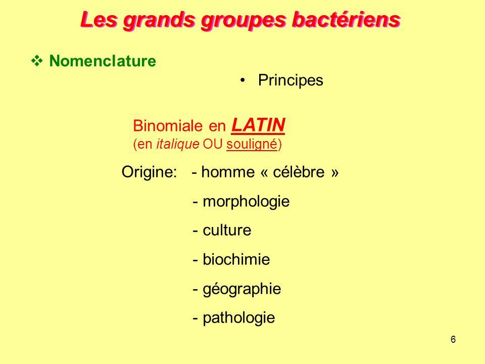 6 Les grands groupes bactériens Binomiale en LATIN (en italique OU souligné) Origine: - homme « célèbre » - morphologie - culture - biochimie - géogra