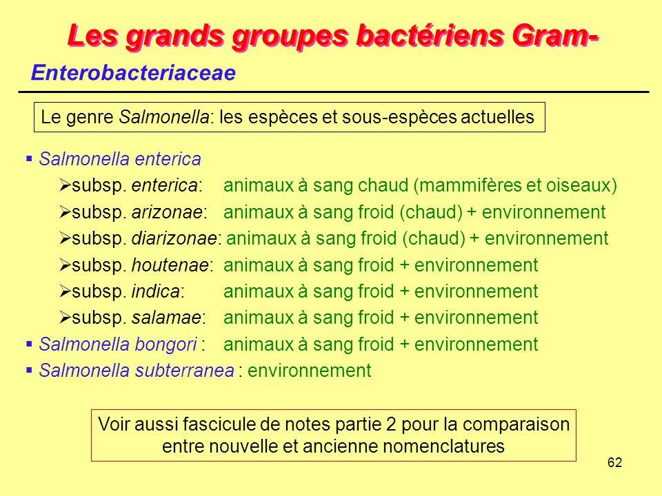 62 Les grands groupes bactériens Gram- Enterobacteriaceae  Salmonella enterica  subsp. enterica:animaux à sang chaud (mammifères et oiseaux)  subsp