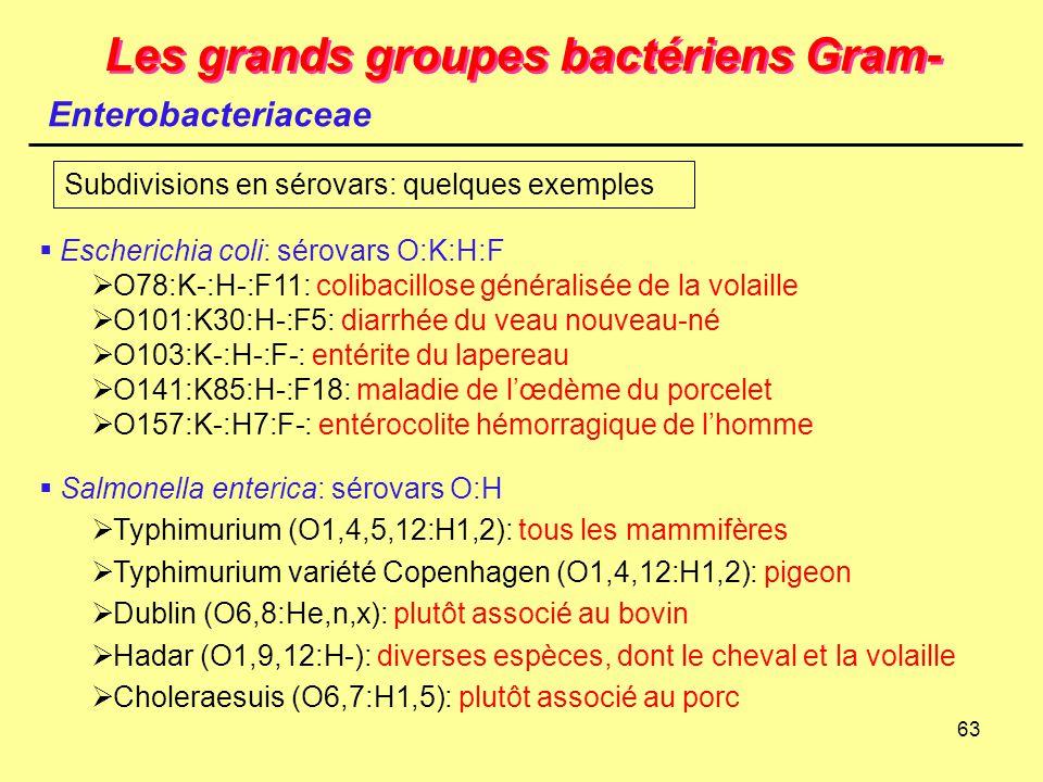 63 Les grands groupes bactériens Gram- Enterobacteriaceae  Escherichia coli: sérovars O:K:H:F  O78:K-:H-:F11: colibacillose généralisée de la volail