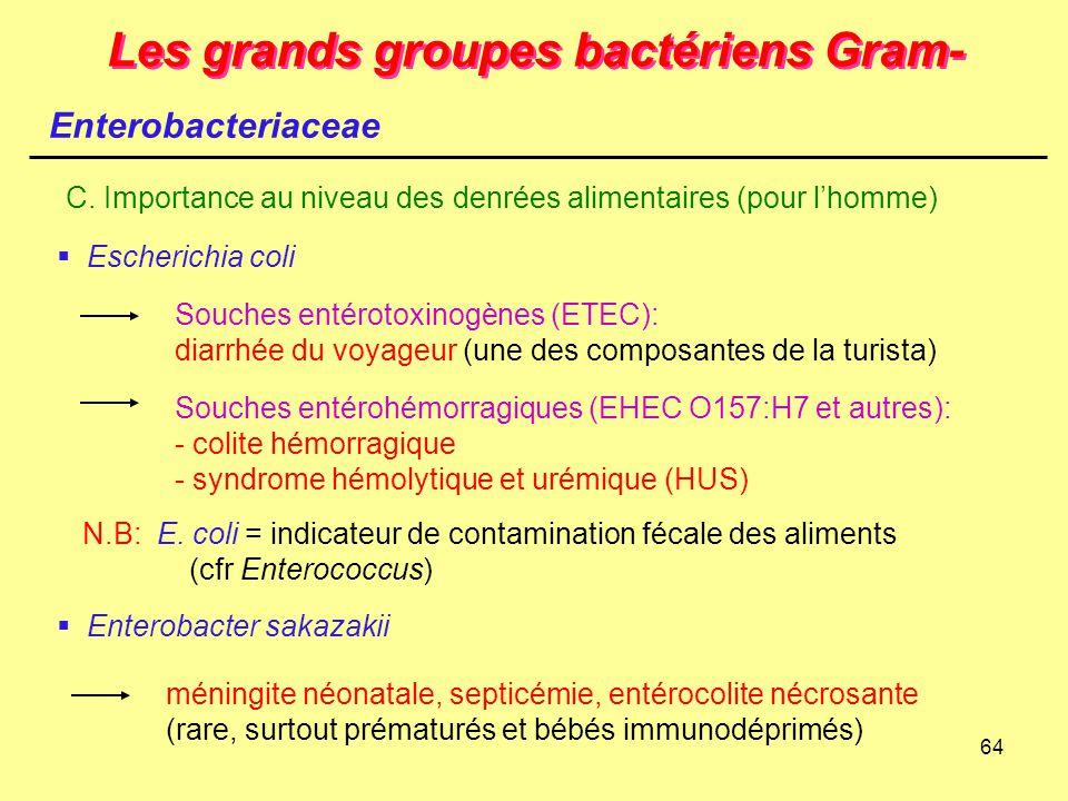 64 Les grands groupes bactériens Gram- Enterobacteriaceae C. Importance au niveau des denrées alimentaires (pour l'homme)  Escherichia coli Souches e