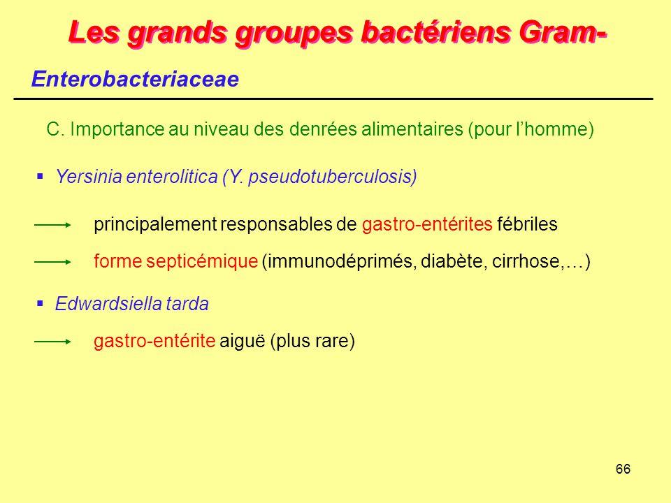 66 Les grands groupes bactériens Gram- Enterobacteriaceae C. Importance au niveau des denrées alimentaires (pour l'homme)  Yersinia enterolitica (Y.