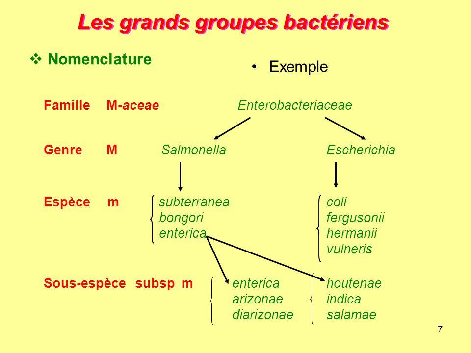 7 Les grands groupes bactériens Famille M-aceae Enterobacteriaceae Genre M SalmonellaEscherichia Espèce m subterraneacoli bongorifergusonii entericahe