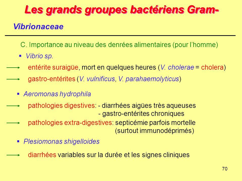70 Les grands groupes bactériens Gram- Vibrionaceae C. Importance au niveau des denrées alimentaires (pour l'homme)  Vibrio sp. gastro-entérites (V.