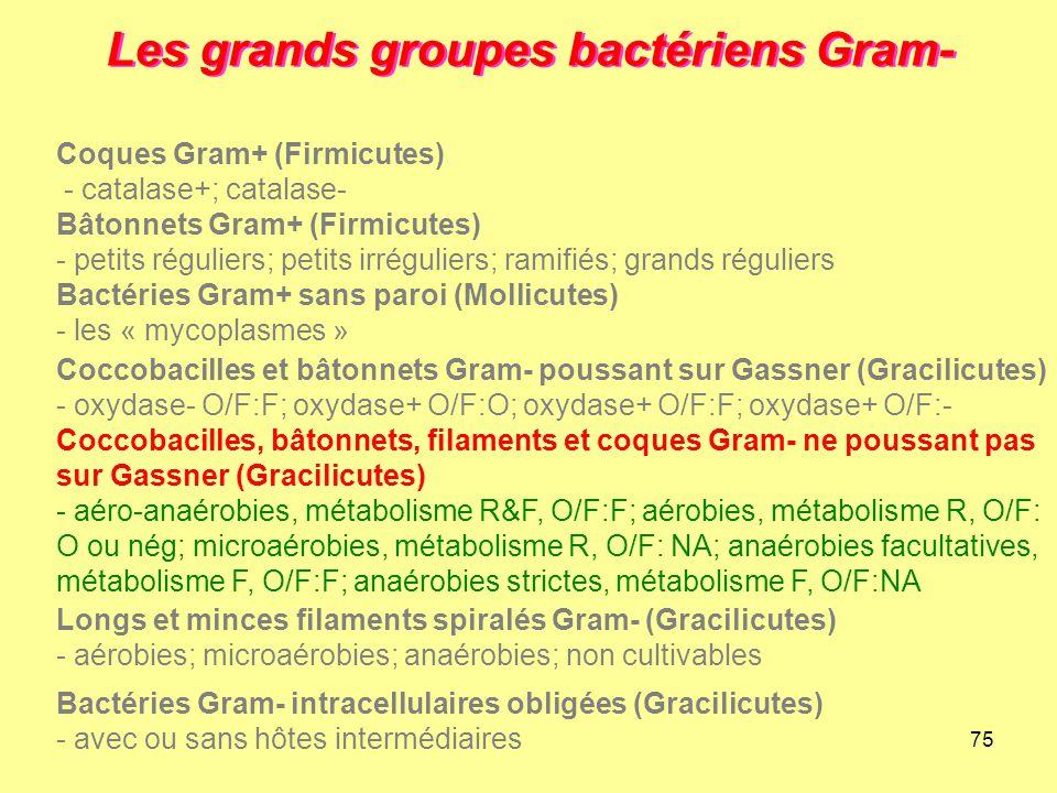 75 Les grands groupes bactériens Gram- Longs et minces filaments spiralés Gram- (Gracilicutes) - aérobies; microaérobies; anaérobies; non cultivables