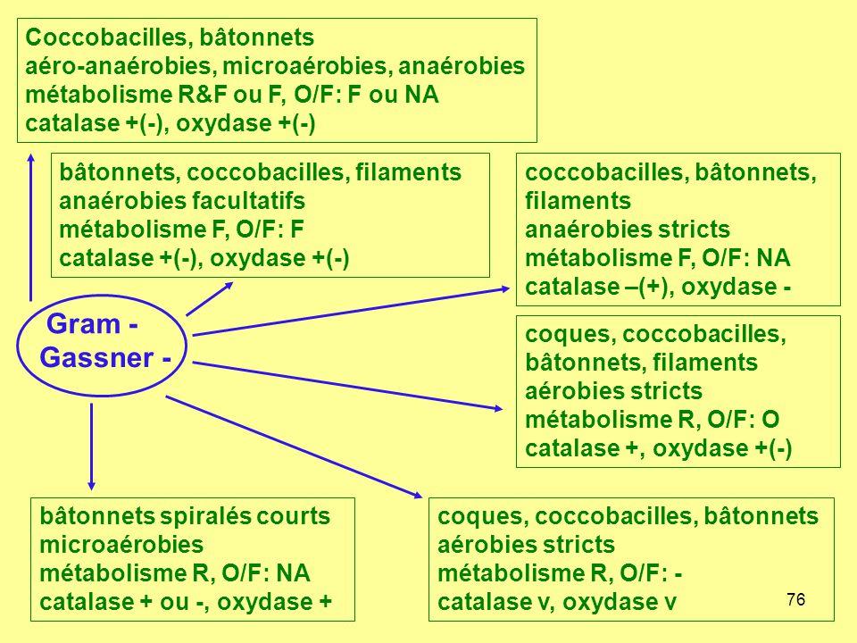 76 Gram - Gassner - Coccobacilles, bâtonnets aéro-anaérobies, microaérobies, anaérobies métabolisme R&F ou F, O/F: F ou NA catalase +(-), oxydase +(-)