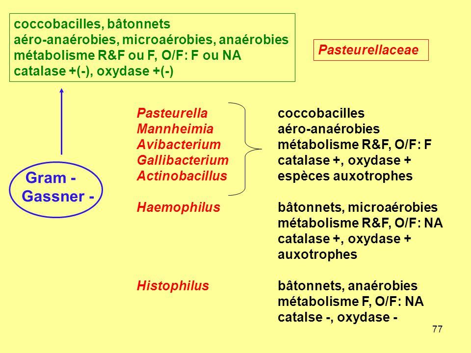 77 Gram - Gassner - Pasteurellacoccobacilles Mannheimiaaéro-anaérobies Avibacteriummétabolisme R&F, O/F: F Gallibacteriumcatalase +, oxydase + Actinob