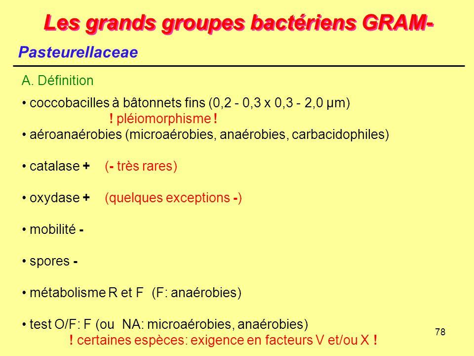 78 Les grands groupes bactériens GRAM- Pasteurellaceae A. Définition coccobacilles à bâtonnets fins (0,2 - 0,3 x 0,3 - 2,0 µm) ! pléiomorphisme ! aéro
