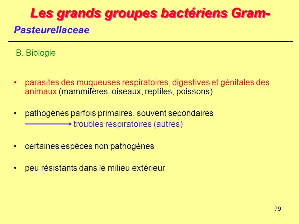 79 Les grands groupes bactériens Gram- parasites des muqueuses respiratoires, digestives et génitales des animaux (mammifères, oiseaux, reptiles, pois