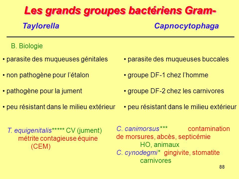 88 Les grands groupes bactériens Gram- B. Biologie parasite des muqueuses génitales non pathogène pour l'étalon pathogène pour la jument peu résistant