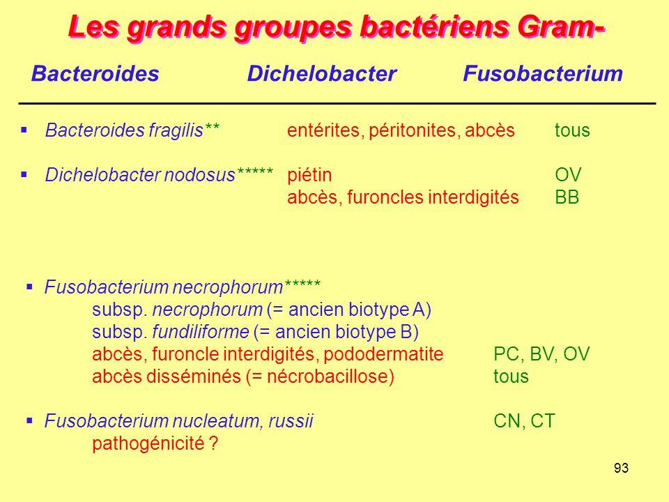 93 Les grands groupes bactériens Gram-  Bacteroides fragilis**entérites, péritonites, abcès tous  Dichelobacter nodosus*****piétin OV abcès, furoncl