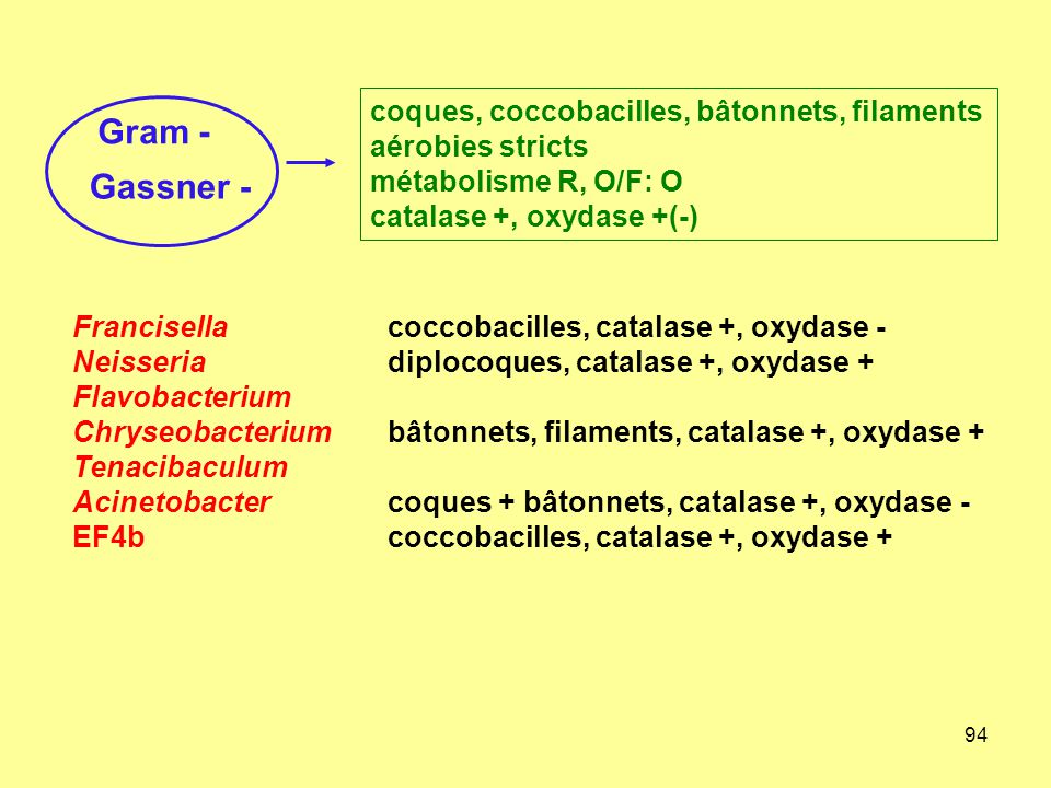 94 Francisellacoccobacilles, catalase +, oxydase - Neisseriadiplocoques, catalase +, oxydase + Flavobacterium Chryseobacteriumbâtonnets, filaments, catalase +, oxydase + Tenacibaculum Acinetobactercoques + bâtonnets, catalase +, oxydase - EF4bcoccobacilles, catalase +, oxydase + Gram - Gassner - coques, coccobacilles, bâtonnets, filaments aérobies stricts métabolisme R, O/F: O catalase +, oxydase +(-)
