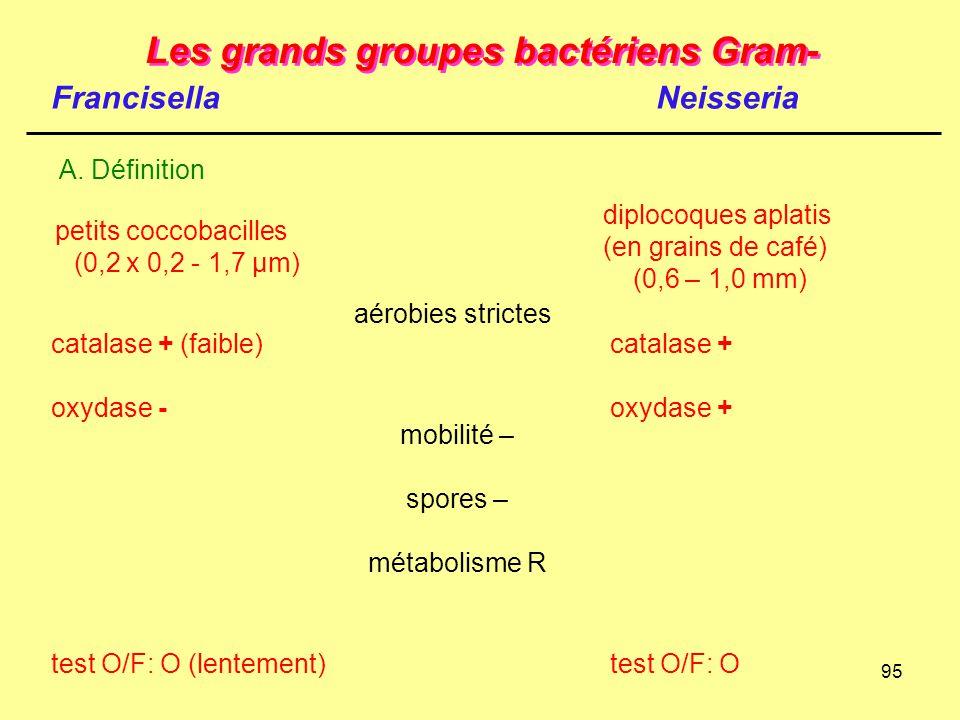 95 Les grands groupes bactériens Gram- Francisella A. Définition Neisseria catalase + (faible) oxydase - test O/F: O (lentement) catalase + oxydase +